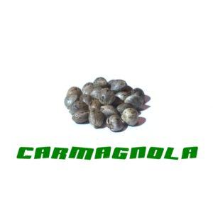 Carmagola Gardinova 200Pcs